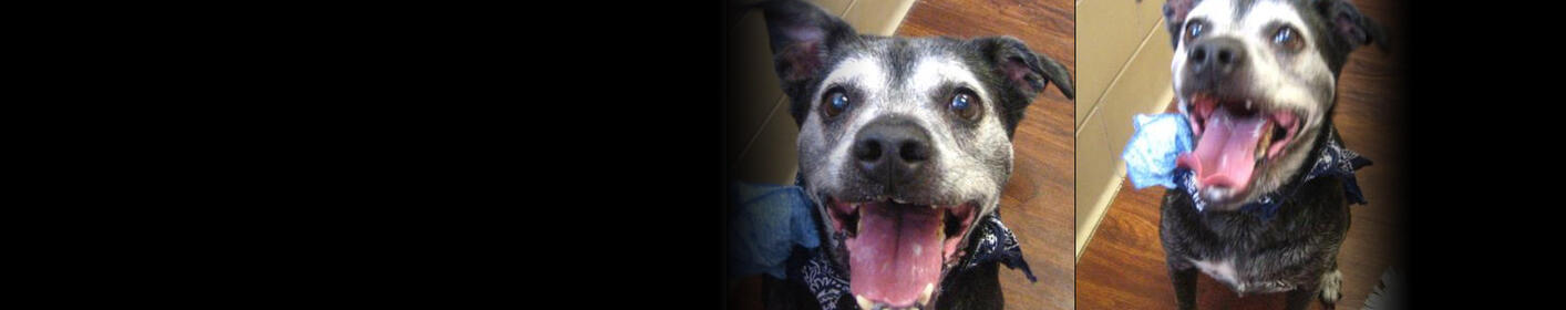 Meet Buddy! Click Here & Learn How You Can Adopt!
