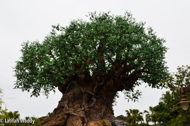 The Tree of Life at Walt Disney World's Animal Kingdom during Disney's Dreamers Academy