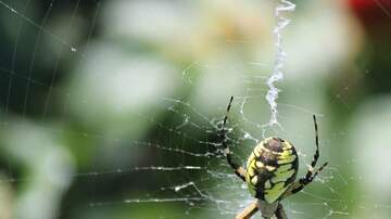 The Wicked Cool Morning Show - If Spiders Worked Together We Would All Be Gone In A Year