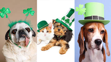 image for St. Patrick's Day Pets