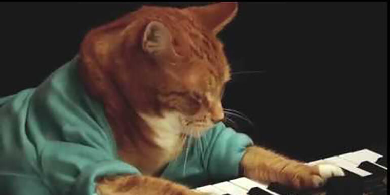 Keyboard Cat Has Passed Away at Age 9