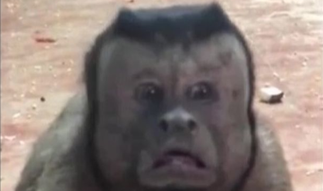 Monkey With Human Face Freaks People Out At Zoo