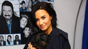 iHeartRadio Music Awards - Demi Lovato Reacts To Batman Losing Musician's Cutest Pet (VIDEO)