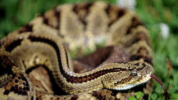 Cruz - Officer Saves Sleeping Couple from Rattlesnake!