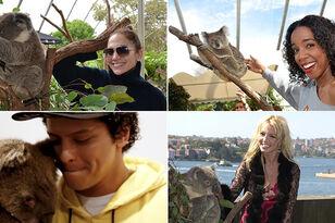 17 Photos Of Celebs Existing Near Koalas