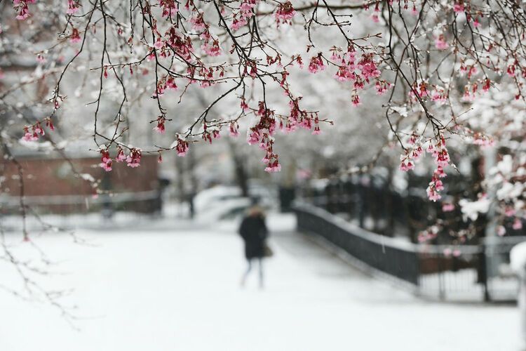 Spring Snow / Getty Images