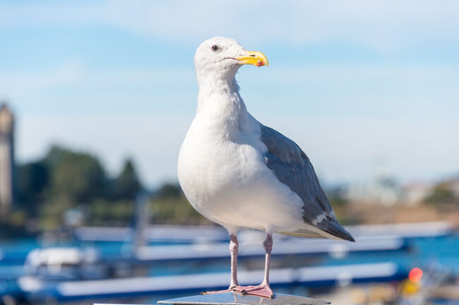 Seagull in Victoria Harbour (Getty Images)