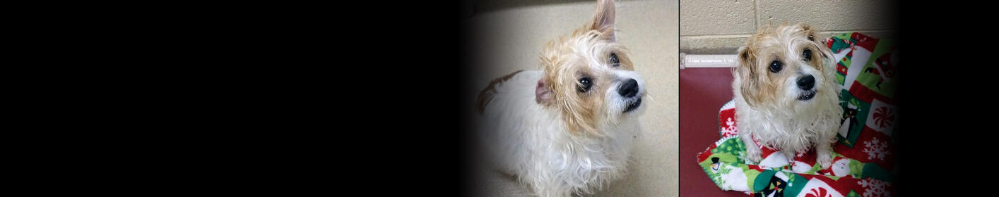 Meet Dior! Click Here & Learn How You Can Adopt!