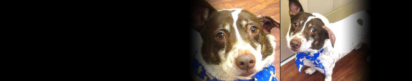 Meet Jack! Click Here & Learn How You Can Adopt!
