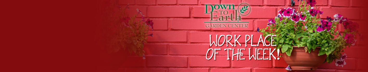 Click to enter for your chance to win a hanging basket from Down to Earth Garden Center!