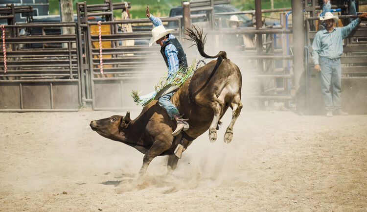 Bull riding getty images