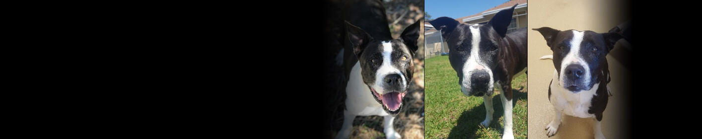 Meet Dahlia! Click Here & Learn How You Can Adopt!