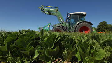 The Morning Rush - Romaine Lettuce Back In Stores and Safe To Eat