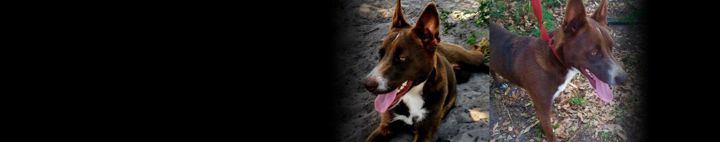 Meet Cooper! Click Here & Learn How You Can Adopt!