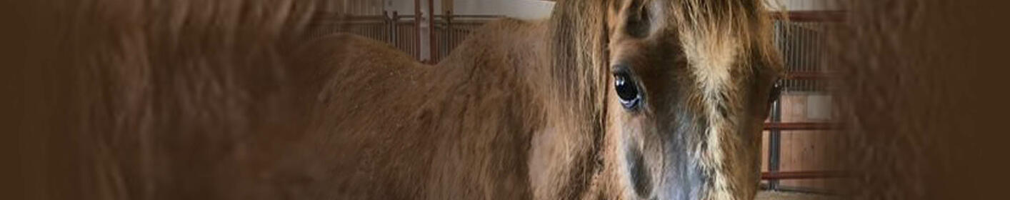 Starved Earlham ponies getting food and care PHOTOS