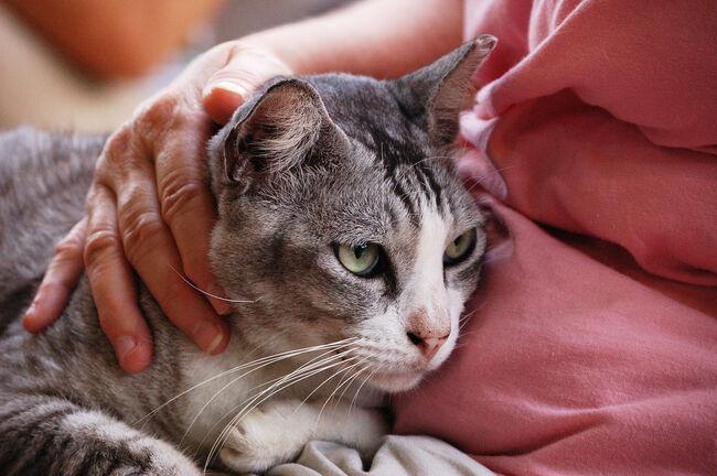 Cat Getty RF