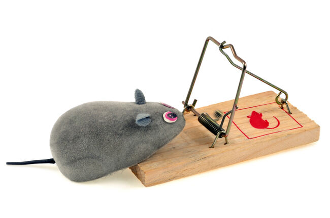 Mousetrap Getty RF