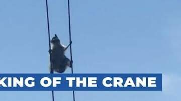 DJ AGRO - Check out this brave racoon. Climbing level CHAMPION! lol