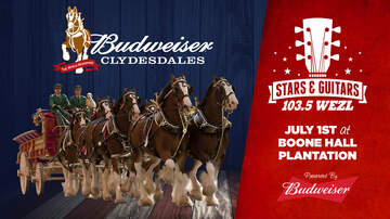 Stars (2164) - The Budweiser Clydesdales to join us at Stars & Guitars 2018