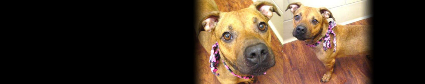 Meet Honey! Click Here & Learn How You Can Adopt!