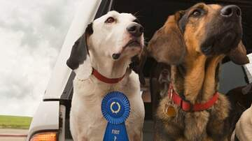 Julie's - What Is This Year's Most Popular Dog Breed?