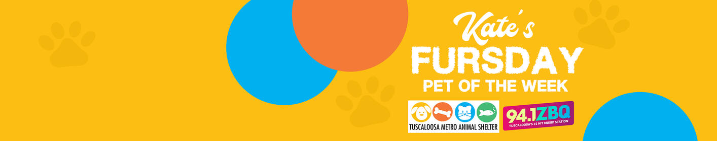 Looking to adopt a fur baby? Check out Kate's Fursday Pet of the Week every Thursday!
