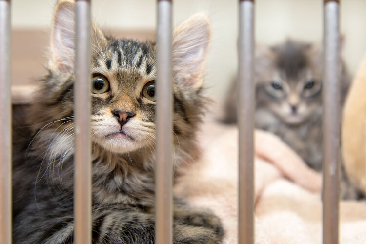Cats Animal Shelter Getty RF
