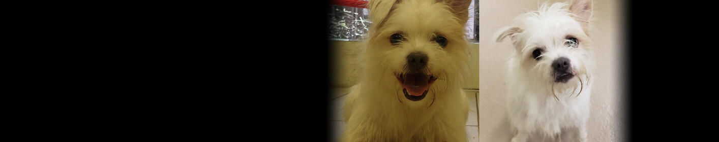 Meet Comet! Click Here & Learn How You Can Adopt!