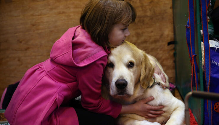 Dogs Intentionally Try to Cheer Up Upset Humans, Study Says