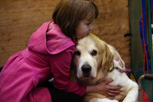 Dogs Try to Comfort Upset Humans, Study Shows