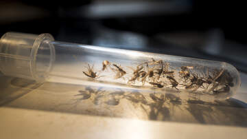 Local News - Officials Warn About Increase In Mosquitoes Due To Barry