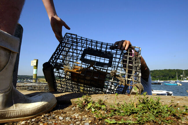 NORTHPORT, NY - JULY 13: Lobster fisherman John Lheron reaches up for a lobster trap July 13, 2003 in Northport, New York. Lheron is one of only a few lobsterman left on Long Island as a mysterious disease has been killing off lobsters in the Long Island Sound since 1999. Before the die-off lobstermen could bring in up to 900 lobsters a day; now they average 40 on a good day, barely enough to cover operating costs. Some scientists believe the dwindling numbers have been caused by pesticides sprayed to combat West Nile Virus, while others believe shore development has altered the habitats of lobsters and bivalves including oysters, scallops and clams. As scientific studies continue, a way of life for generations of fishermen is slowly disappearing. (Photo by Spencer Platt/Getty Images)