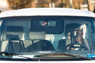 Man Facing Criminal Damages After Breaking Window To Save Dog Left In Car