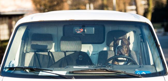 Dogs in hot cars legislation SB215