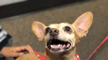 The Sunny Pet of the Week - Mojo Is Our Sunny Pet Of the Week -- UPDATE: Adopted