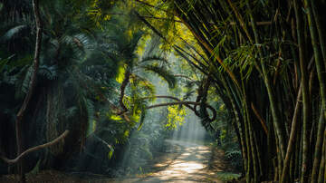 Yako - Fakahatche State Park Una Selva Escondida En Fla!