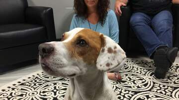 Pet of the Week - Homer, the super sweet 2yo Terrier Mix. At Humane Society of South MS