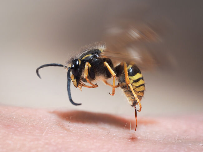 Wasps | GettyImages-582268634