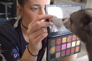 Beauty YouTubers Are Having Their Dogs Pick Out There Makeup