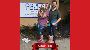 Wags with Wendy - Wags with Wendy 08/14 - Jimmy ADOPTED!