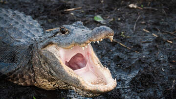 Around the Carolinas - Woman Deceased After Alligator Attack on Hilton Head Island