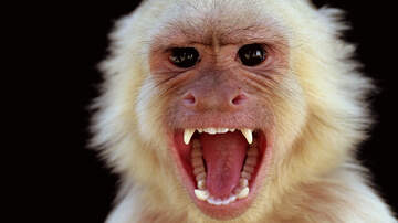 "Charlie Munson - Man Stoned To Death By Monkeys… Family ""Wants Justice"""