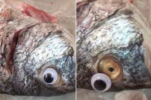 Fish Market Shut Down For Putting Googly Eyes On Fish