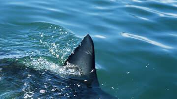 Laura Anderson - UPDATE:  Savananh shark bite victim is long-time lawyer