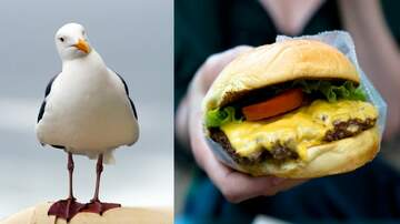 JoMaestro - Man FINED For Kicking A Seagull That Ate His Cheeseburger