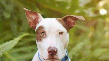 Company Critters presented by Holistic For Pets - Anakin has been adopted!