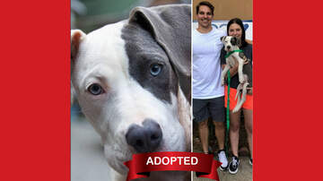 Wags with Wendy - Wags with Wendy 08/28 - Darling ADOPTED!