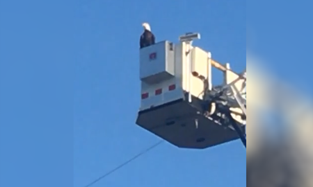 Uplifting - 'Phenomenal!' Bald Eagle Lands on Fire Department's 9/11 Memorial