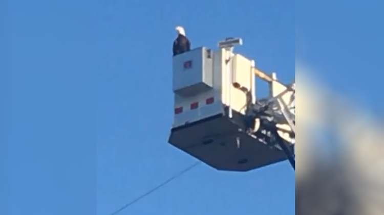 eagle lands on fire department's 9/11 display