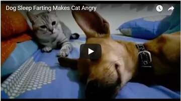 Todd Berry - WATCH: Sleeping Dog + Toot + Cat = FUNNY!